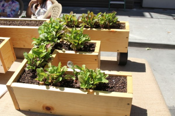 One of the planter boxes at Local Grow's booth during Sunday Streets. Photo by Joe Rivano Barros.