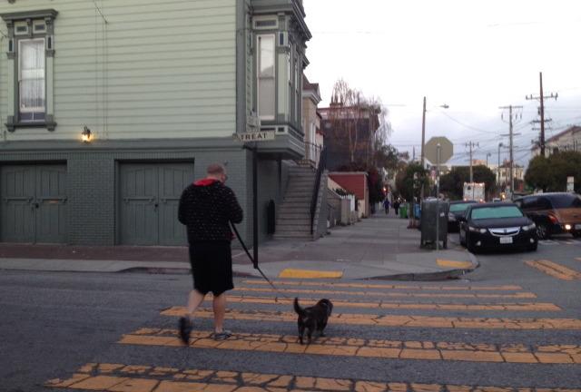 SNAP: Dog Walking