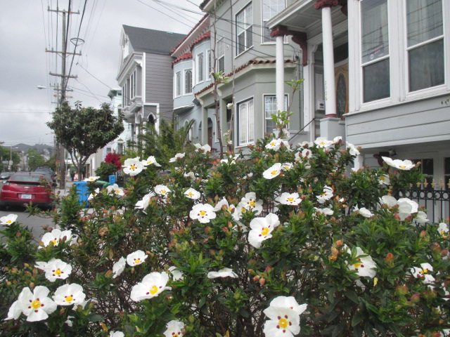 White Blooms on 21st St