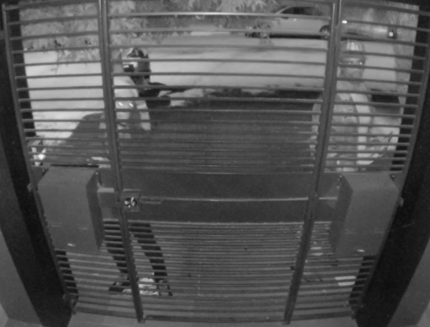 Security footage of two mail thieves breaking into sidewalk-accessible boxes. Photo courtesy of Bryan Kennedy.
