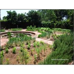Small Crop Of Walled Vegetable Garden