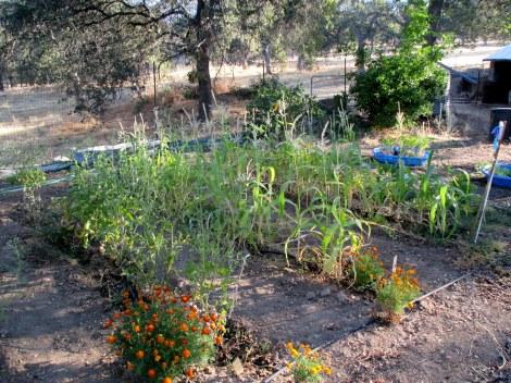 Our garden August 2013