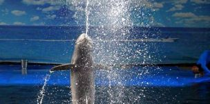 dolphins pattaya