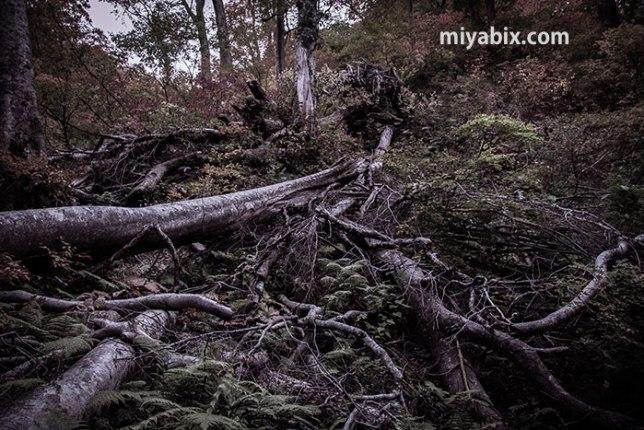 森,災害,倒木