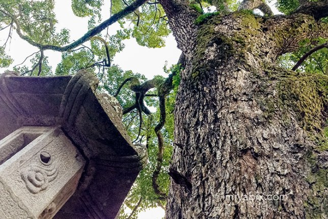 大森神社,パワースポット,御神木