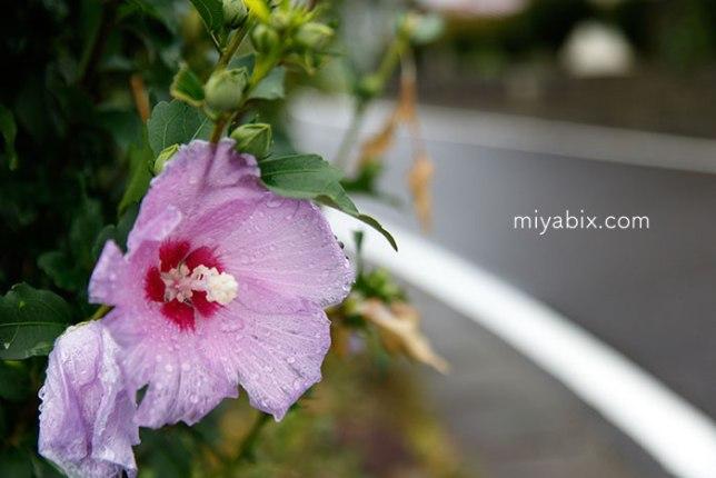 道に咲く花
