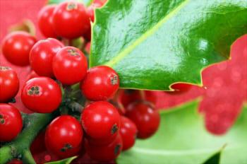 berry-2389_640