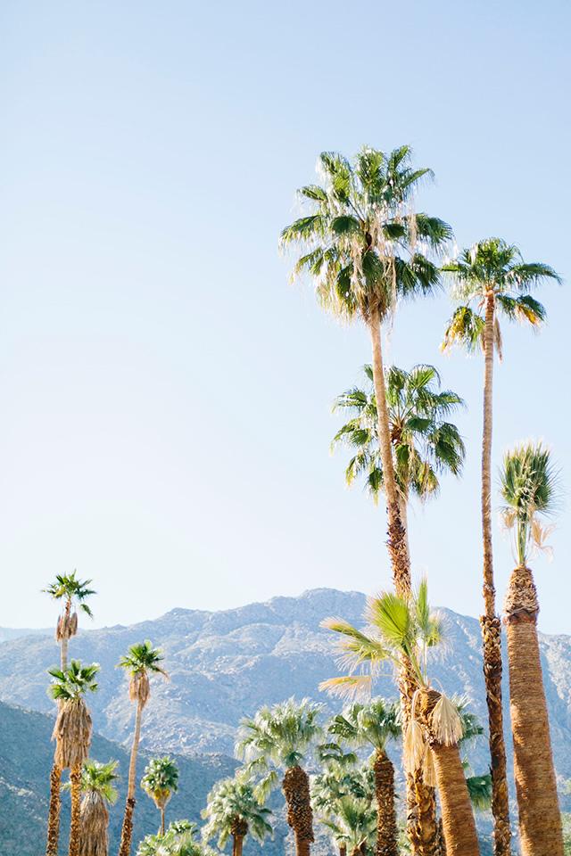 palm springs getaway for modernism week M Loves M