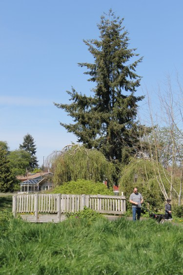 Ballinger Park is a great play for young and old to go for a walk.