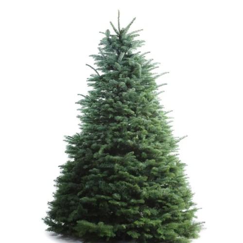 Medium Crop Of Fresh Cut Christmas Trees