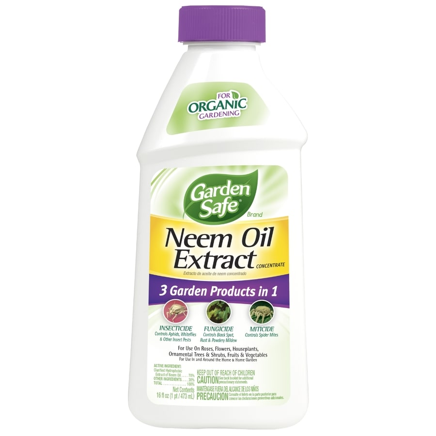 Aweinspiring Garden Safe Neem Oil Extract Oz Organic Garden Insect Killer Shop Garden Safe Neem Oil Extract Oz Organic Garden Insect Lowes Oneida Ny Jobs Lowes Oneida Ny Holiday Hours houzz-03 Lowes Oneida Ny