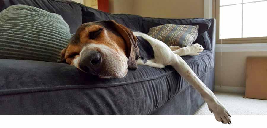 C mo limpiar un sof de tela en casa y sobrevivir para - Como limpiar tapiceria sillas ...
