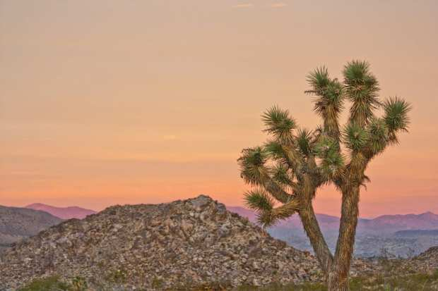 Joshua Tree National Park_Photo credit to National Park Service