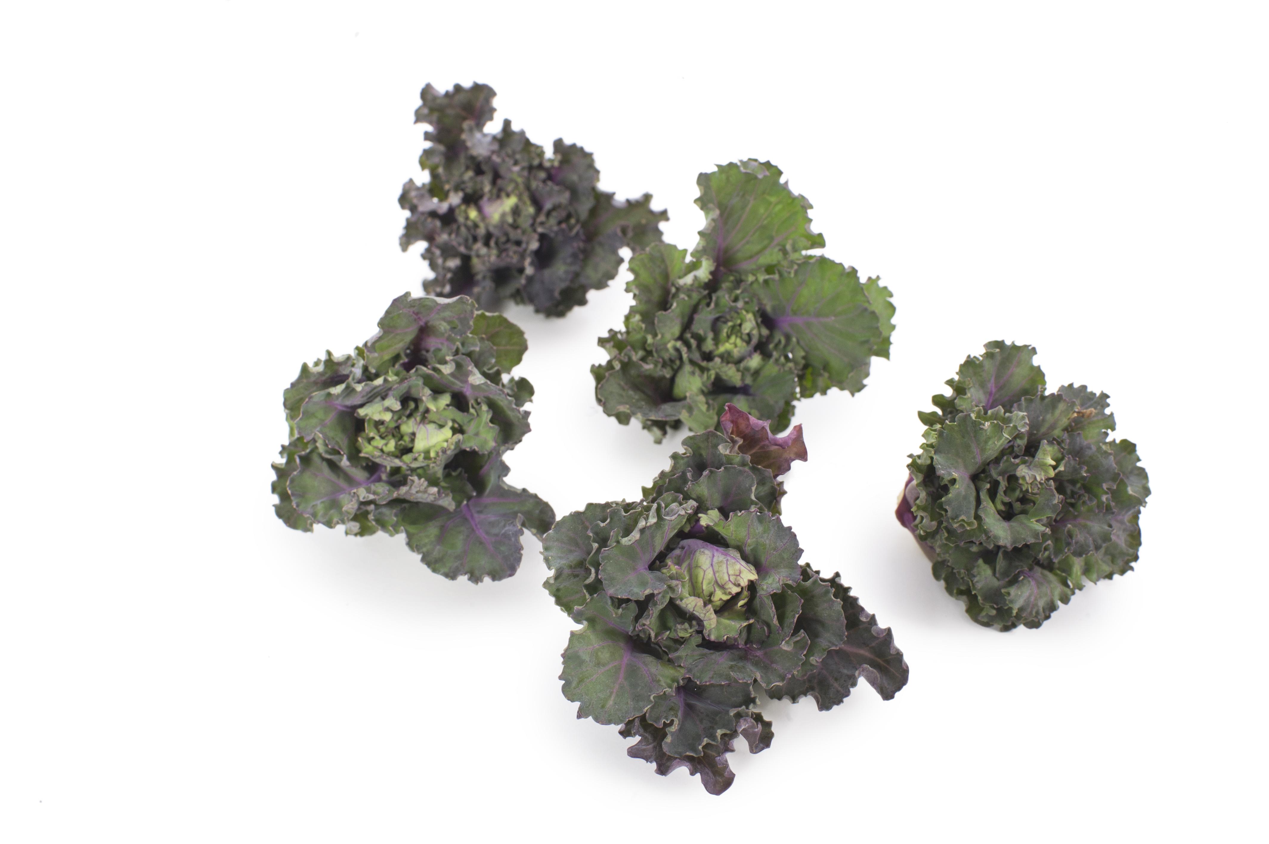 flower sprouts in de moestuin