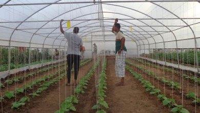 İHH-التركية-تفتح-كلية-الأناضول-الزراعية-في-الصومال