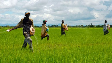 مزارعين-أفارقه