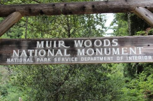Muir Woods 6-4-13 204