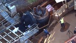 Faulty Amusement Park Ride Claims The Lives Of 4 Victims