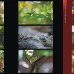 Sumatra folder_s2a