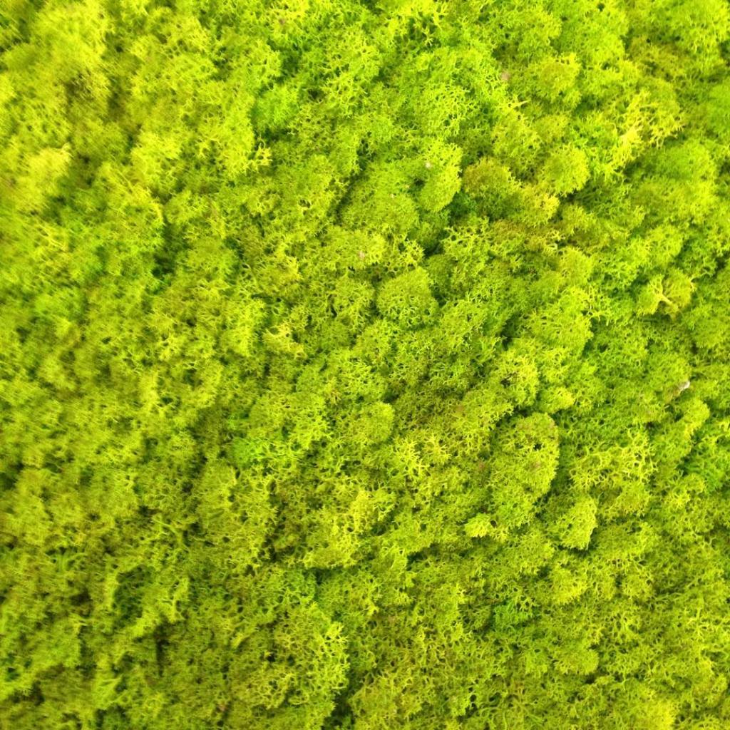 This is called reindeer moss nofilter After being surrounded byhellip