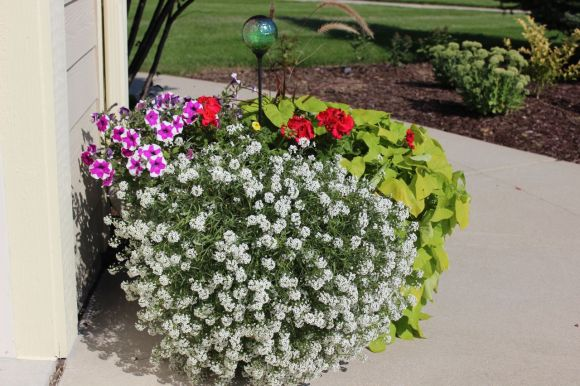pretty planter, get ideas