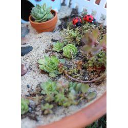 Small Crop Of Little Fairy Garden