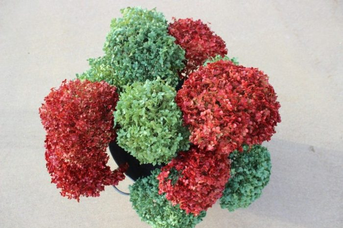 Spray painted hydrangeas