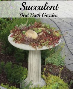 Succulent bird bath. An unused bird bath was repurposed to something that brings me joy.