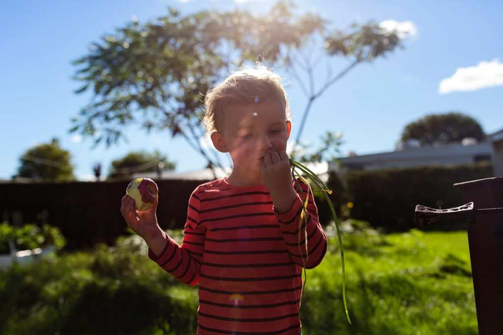 little boy in striped shirt eating apples and holding fistful of grass