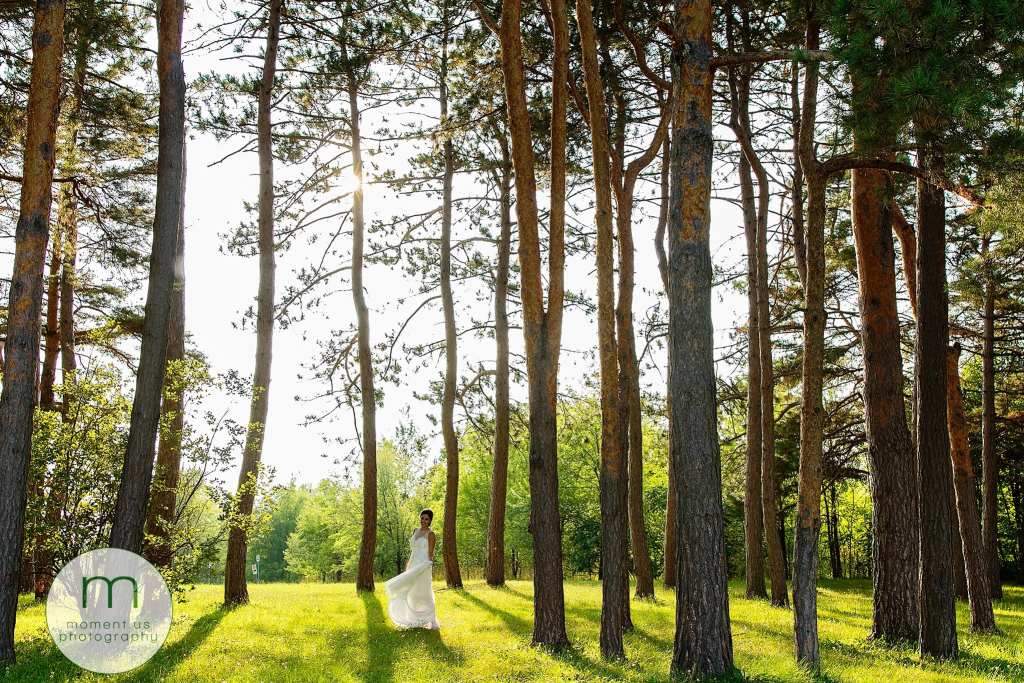 bride twirls amongst tall pines during Ontario & Quebec Wedding Photography portraits