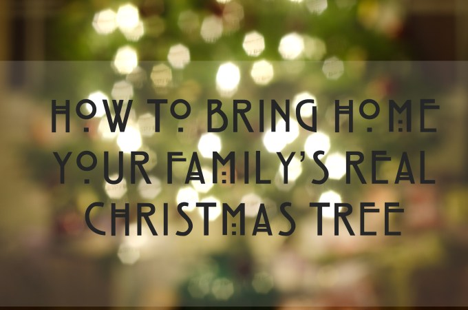 How to Bring Home a Real Christmas Tree When You've Never Had One Before