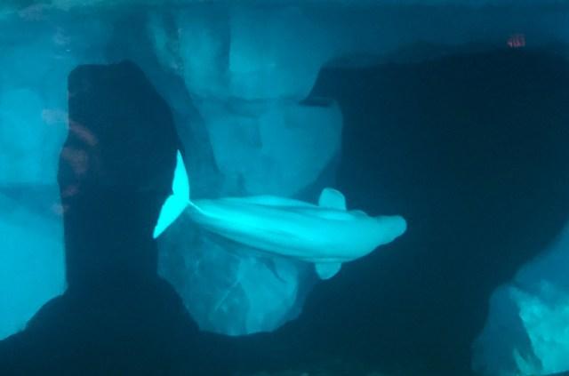Balooga-whale-sea-world