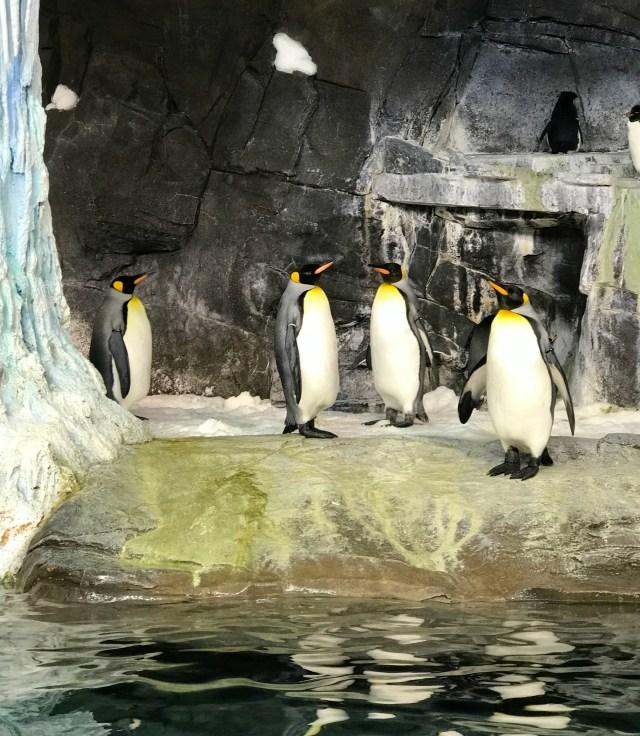 Penguins-sea-world-Orlando