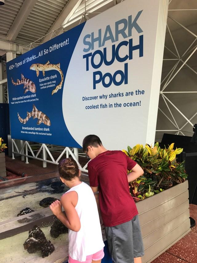 Sharks-Sea-World-Orlando-touch