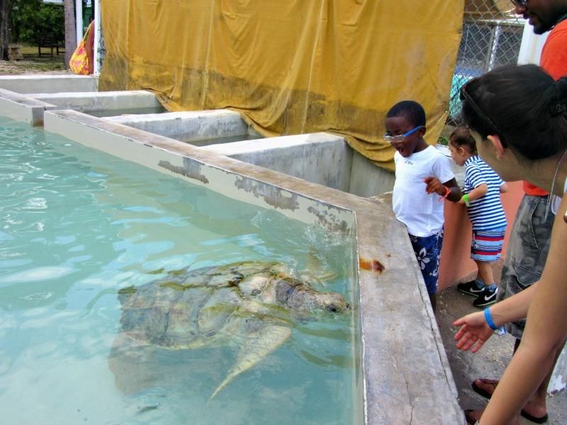 Cayman Island Turtle Fam