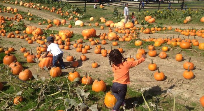 Maryland Fall Festivals & Pumpkin Patches
