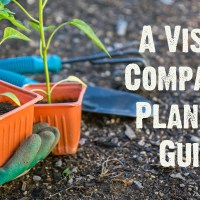 Companion Plant Visual Chart for your Garden
