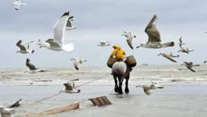 pêche à la crevettes belgique
