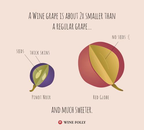 comparaison raisin de cuve et raison de table