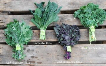 Kale Varietals: Red Russian Kale, Lacinato Kale, Red Monarch Kale, Blue Scotch Kale