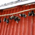 Finnish Cooking Methods:  According to an Eccentric Reindeer Farmer
