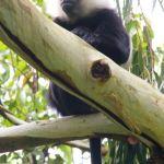 Nyungwe Forest: A Hidden Gem in Rwanda