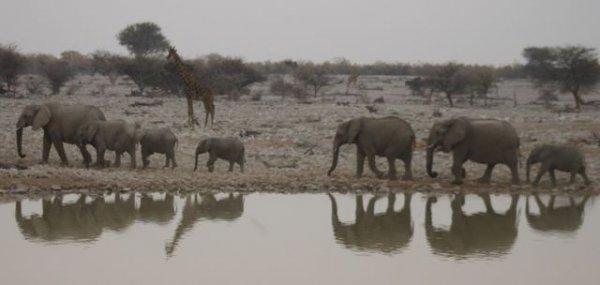 Elephants at water hole in Etosha National Park, Namibia