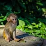 Cute Monkey at the Swayambhunath Temple, Nepal