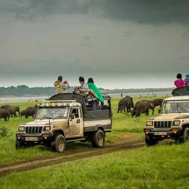 sustainable travel observing elephants in the wild