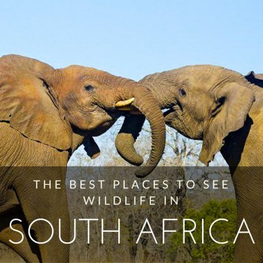 The Best Places to Visit in South Africa For Wildlife
