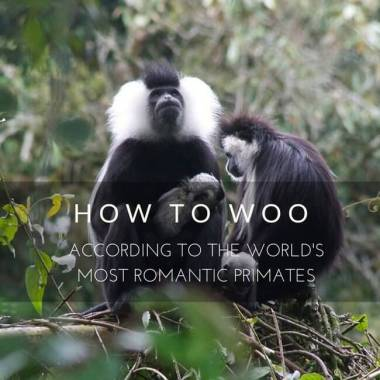 How to Woo According to the World's Most Romantic Primates