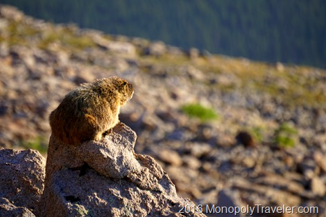 Marmots came out to greet us