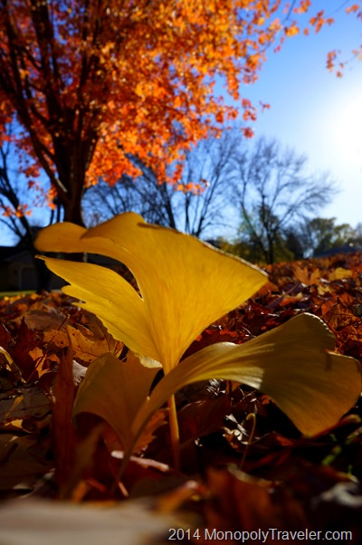Gold and Orange Leaves