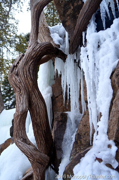 Tree roots growing through ice and rock